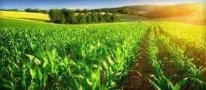 The usage of phosphoric acid in agriculture