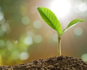 potassium carbonate in agriculture