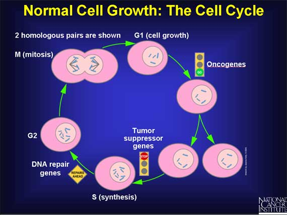 Vitamin A benefits in Cell growth