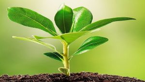 the uses of ammonium thiosulfate in fertilizer