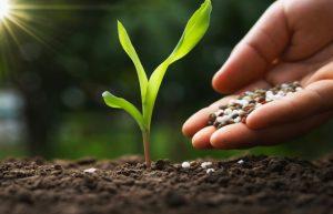 application of phosphorus pentoxide in plant fertilizers