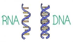 Biomolecules in Organic Chemistry